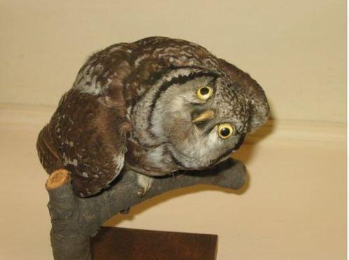 bad-taxidermy-owl