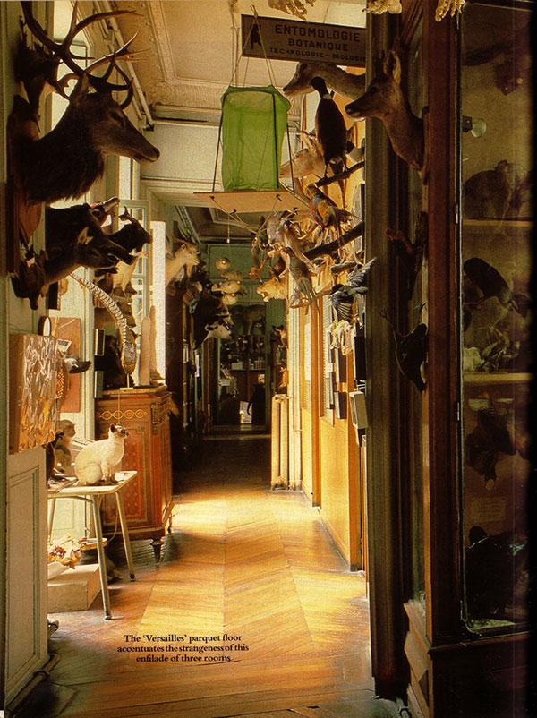 A strange hallway full of Deyrolle taxidermy