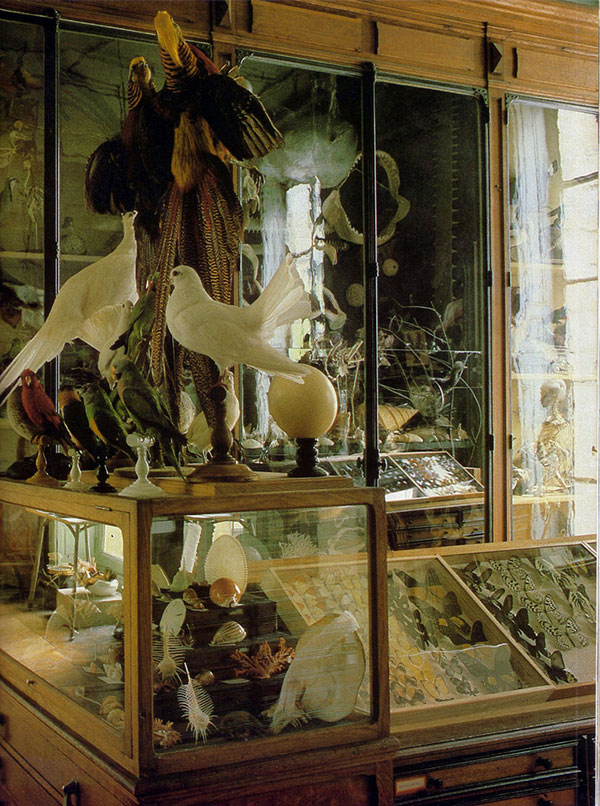 Taxidermy birds, seashells and other interesting items in a class cabinet of curiosity