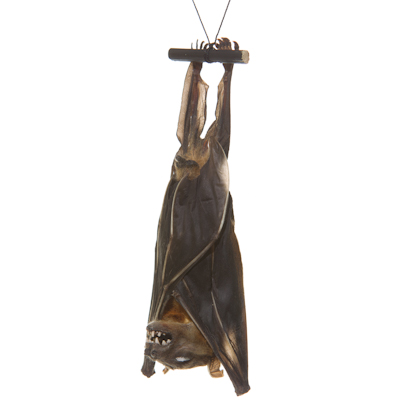 Freeze dried bat from The Evolution Store