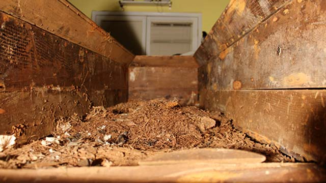 Inside the coffin of Lee Harvey Oswald