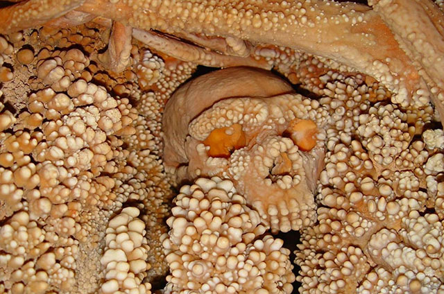 Fossilized remains of the Altamura Man embedded in rock in a cave in Italy
