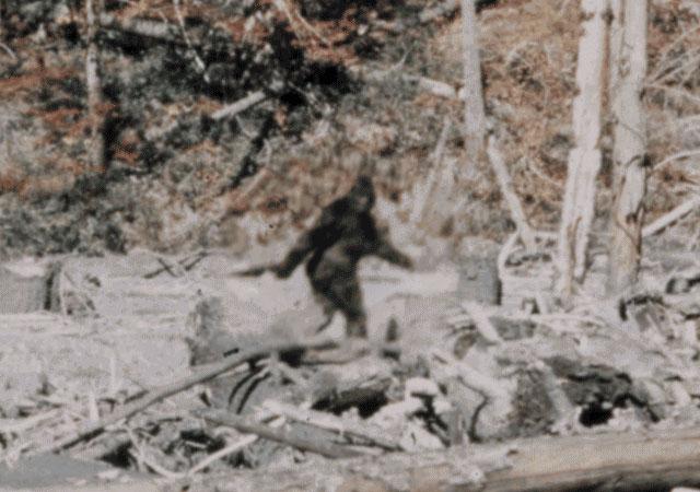 Patterson-Gimlin Bigfoot film stabilized