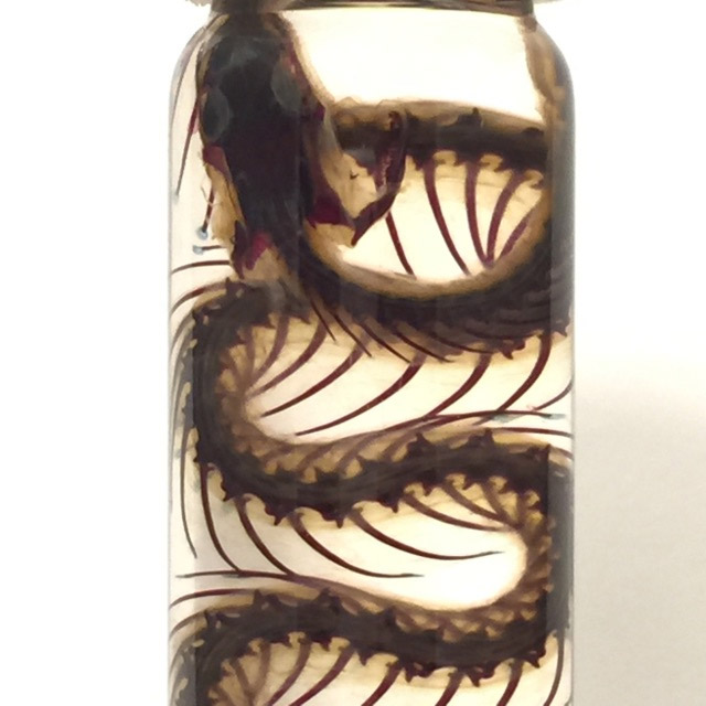 Diaphonized snake wet specimen by Asylum Artwork