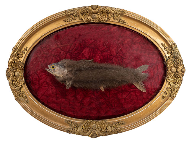 Furry trout