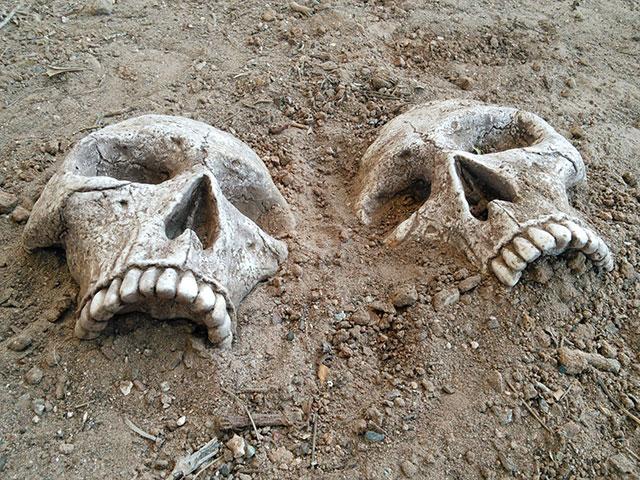 Skull garden stones