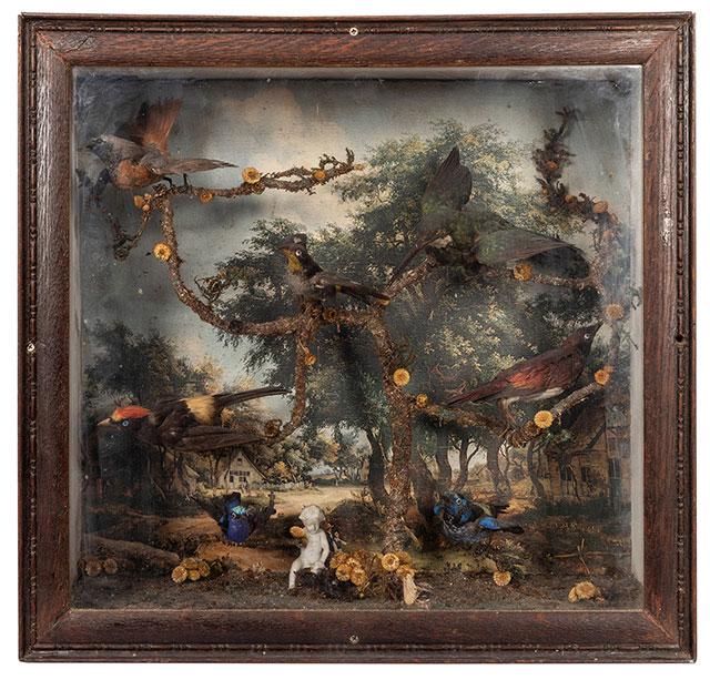 Victorian taxidermy bird diorama